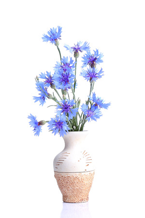 Bouquet of cornflower in a ceramic vase photo