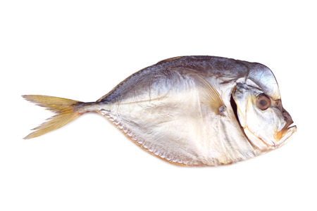 atlantic: Smoked atlantic moonfish isolated on white Stock Photo