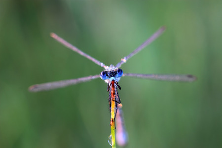 damselfly: Damselfly covered morning dew. Macro Stock Photo
