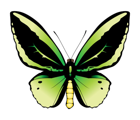 butterfly on a white background Illustration