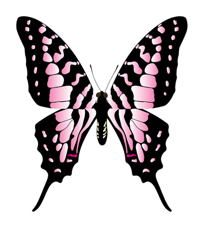 pink and black: butterfly on a white background Illustration