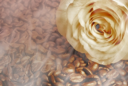 rose on the coffee beans photo