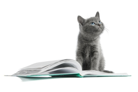 kitten and a book Stock fotó