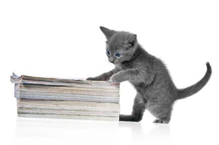 hunter playful: Kitten and a books