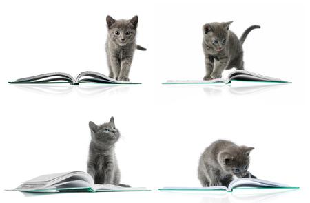 子猫と本。複数の画像