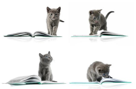 Kitten and a book. Multiple image photo