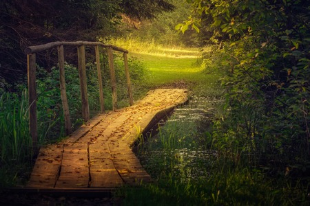 A wooden bridge in summer forest photo