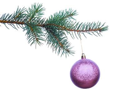 branche sapin noel: D�coration sur une branche d'arbre de No�l isol� sur fond blanc