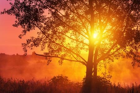 日光にツリーと霧の夏の風景