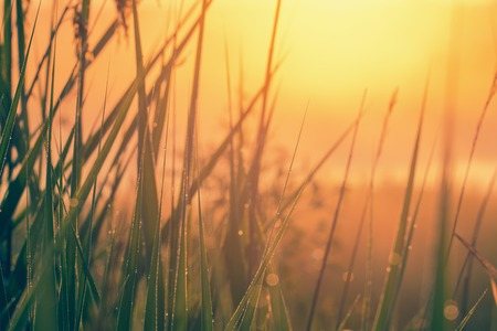Grass with dew against sunrise Stok Fotoğraf