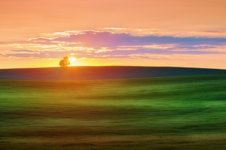 �tree: Landscape with grean field against sunset