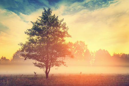 tranquil: Tree over sunrise in summer morning time, focus on tree