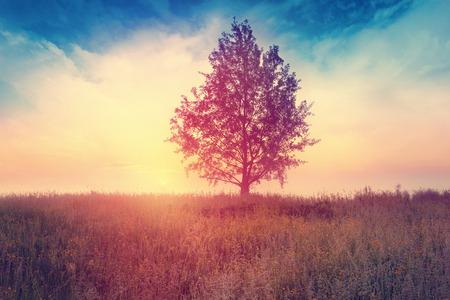 paisajes: Paisaje con �rbol sobre la salida del sol