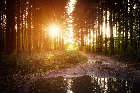 秋の森の雨の後の夕日