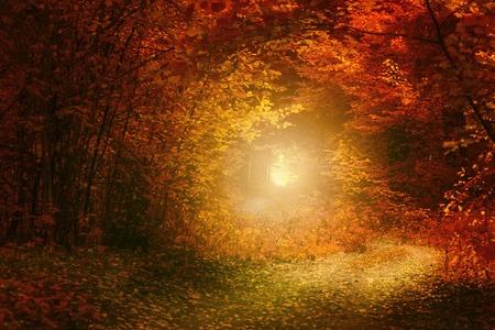 sunlight: Autumn country road over sunlight