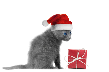 sombrero: Kitten in santa hat and red gift box, isolated in white