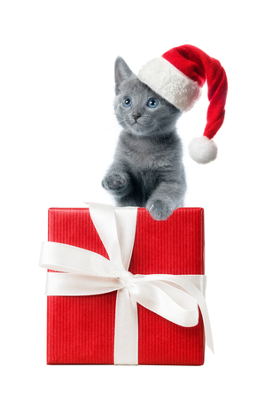 kitten: Kitten in santa hat with red gift box, isolated on white background Stock Photo