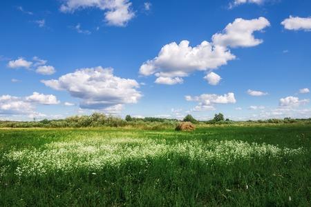 Flower field in summer day Stock Photo
