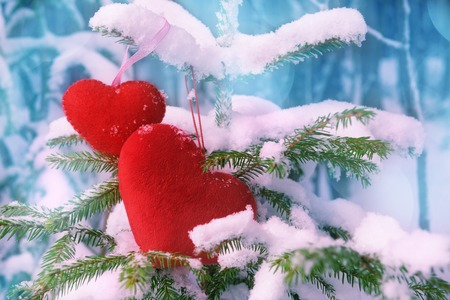 Two red fabric hearts on snow-covered firt ree. Valentines day concept