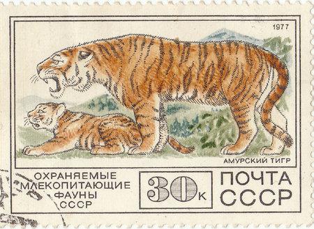 amur: Soviet postage stamp Amur Tiger