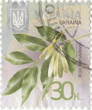 ash: European ash