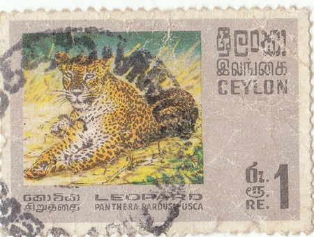 ceylon: Ceylon postage stamp  leopard Editorial