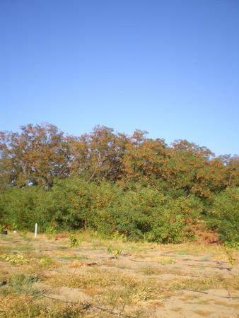foliage tree: Autumn forest near the suburban area