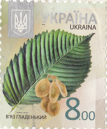 ukrainian: Ukrainian postage stamp   Elm