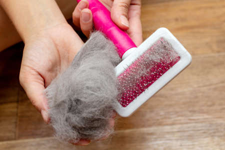 Pet brush with gray fur after grooming pet cat allergy fur concept close up