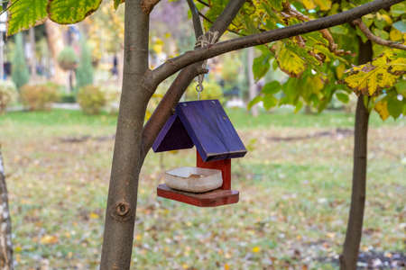 Bird and squirrel feeder hanging on a tree in the park