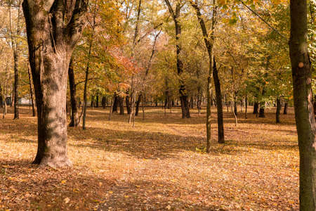 autumn park covered with gold, yellow fallen leaves