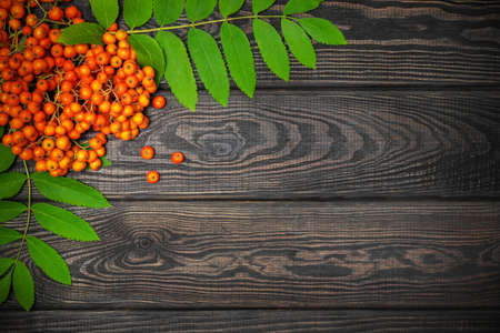 Red rowan berries and green leaves on black boards, free space for the label