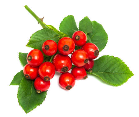 Branch of ripe red dog rose hips and leaves on a white background Stock Photo