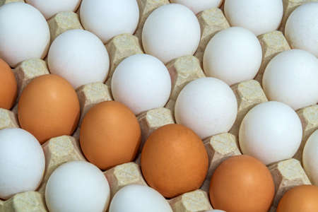 Fresh white and brown chicken eggs in tray. Egg is the main ingredient for cooking Фото со стока