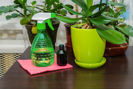 Water and fertilizer on the table for home orchids. The idea of caring for indoor plants