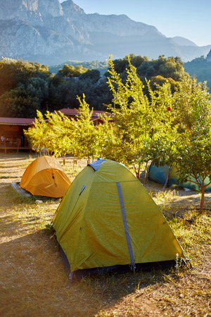riped: tent in the pomegranate orchard with riped pomegranates