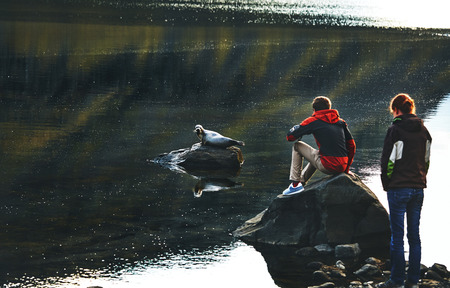 tourists looks on seal on the stone in the lake or bay. Travel to Iceland Stock Photo