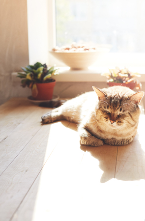 the cat lay on a wooden table and basking in the Sun 版權商用圖片