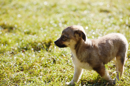 cute puppy is sitting on the green grass on a meadow at morning Stock fotó