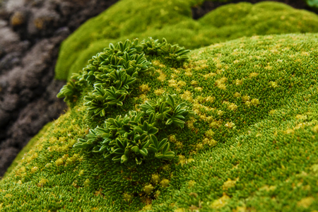Moss-covered stone. Beautiful moss and lichen covered stone. Bright green moss Background textured in nature. Natural moss on stones in forest.