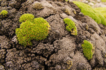Moss-covered stone. Beautiful moss and lichen covered stone. Bright green moss Background textured in nature. Natural moss on stones in forest. Imagens - 122776005