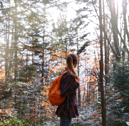 woman hiker is standing on the trail in pine woods and looking away with wonderful backlight from sun on background, back view Imagens