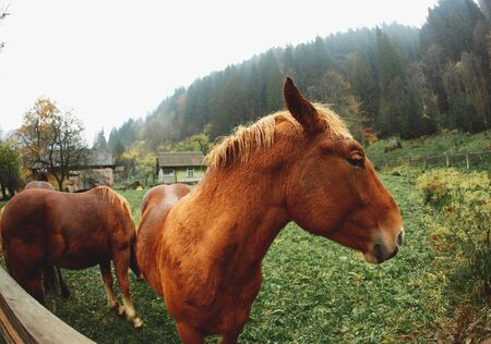 close up horse portrait. cute funny brown horse standing near fence on green meadow. rustic horse farm