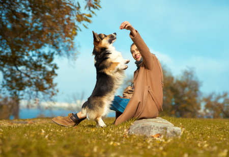 Girl with dog on grass at autumn park, training Welsh Corgi dog outdoors, pet standing on hind legs ad asking food. autumn concept, friendship dog and human. Imagens