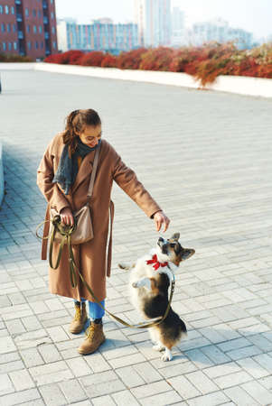Autumn pet walking. woman in coat holding dogs treat, Welsh Corgi tanding on hind legs ad asking food. autumn concept, friendship dog and human. Imagens - 153423118