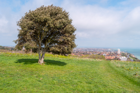 Tree on hill and overview of eastbourne, east sussex, england united kingdom