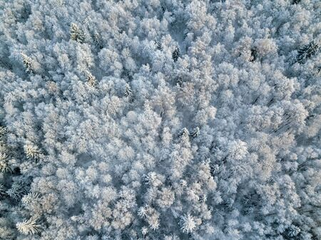Aerial Drone View of Snow Covered Evergreen Christmas Tree Forest after Snow