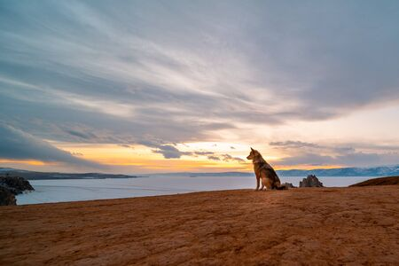 The dog on sunset sky, Burkhan island Olkhon at Baikal lake, Russia