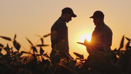 Dos agricultores hablan en el campo. Usa una tableta