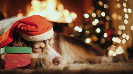Shepherd in a festive cap sweetly dozing by the burning fireplace. Near it lies a crust with a gift Фото со стока